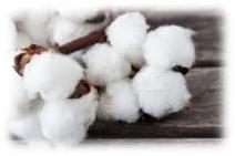 cotton-fibers-humidity-control